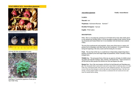 lowresJMVFGuyanaFruitBook_Part1_09_2014 (dragged)